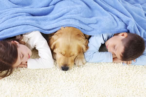 denton pet odor carpet cleaning