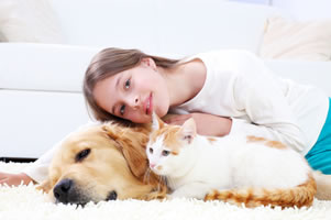 pet odor removal denton